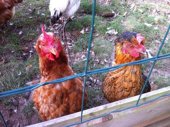 Les Pres de Mautort: Chicken head....