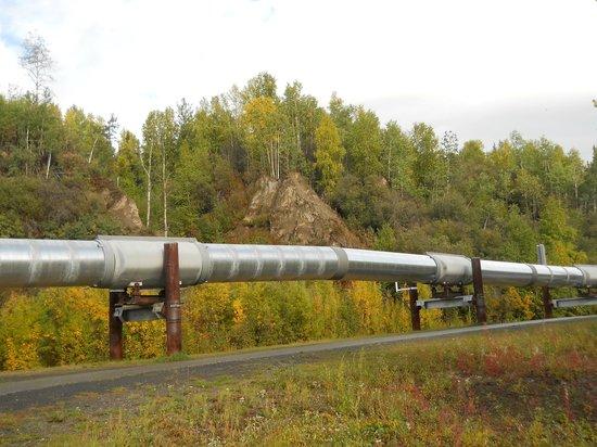 Alaskan Pipeline: Alaska Pipeline near Fairbanks