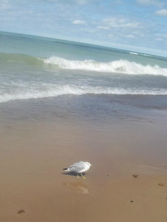 Indiana Dunes National Lakeshore: beach with seagull