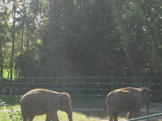 Syracuse, NY: elephants