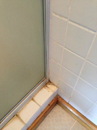Mango Lodge: Modling Shower