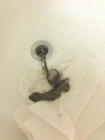 Homewood Suites by Hilton Cedar Rapids North : Drain in bathtub was so full of hair that it would not close.