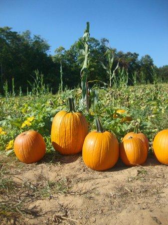 Butler's Orchard: Pumpkins!