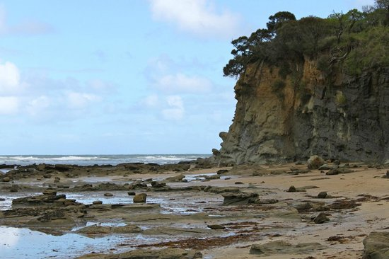 Dinosaur Dreaming: General view of the fossil bearing section of the Inverloch coast