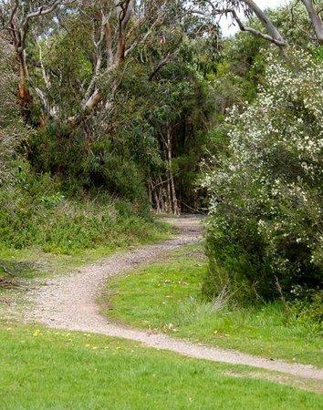 Walking track near Fisher's wetland