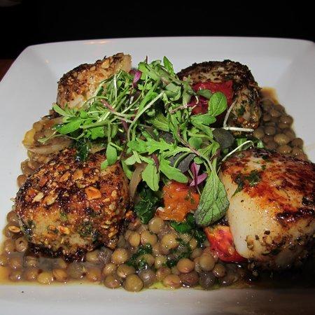 Mache Bistro: Scallops over lentils