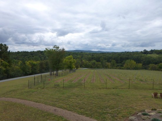 Cana Vineyards and Winery: Looking out over the Virginia Countryside