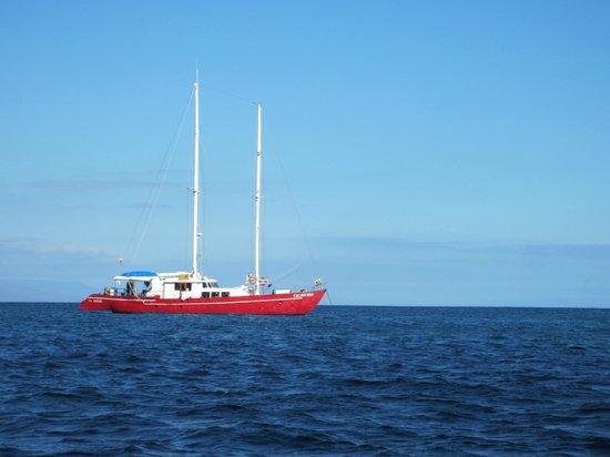 Scuba Galapagos: The Encantada