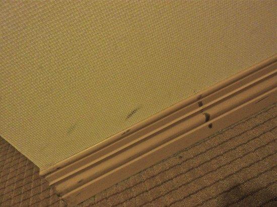 Sheraton Philadelphia Downtown Hotel: Scruffed walls. . .is anyone paying attention?