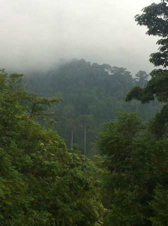 The Shorea: View of the misty jungle