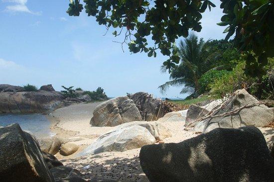 Hi Coral Cove Bungalow: Пляж у отеля