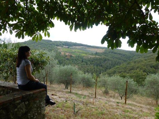 Fattoria Tregole : beautiful view