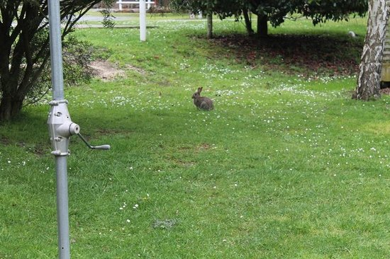 Launceston Holiday Park Legana: Friendly Bunny