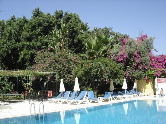 Bloemen bomen tuin rond het zwembad picture of jasmine hotel apartments limassol tripadvisor - Ontwikkeling rond het zwembad ...