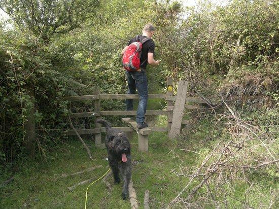 """Lower Campscott Farm : """"Dog Lifting"""""""