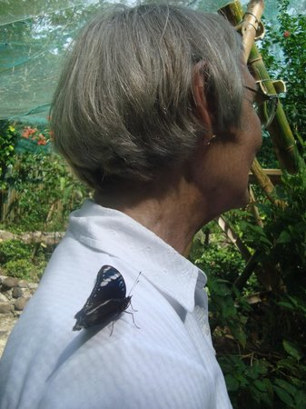 Butterfly Sanctuary at Mambukal Resort : it rested on her shoulder!