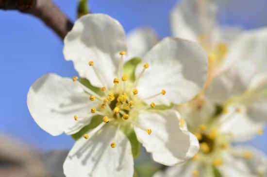 TikayKilla Lodge & Wines: Flor del jardín