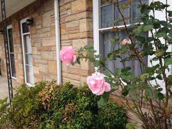 Carolina Country Inn: Beautiful roses attract hummingbirds.