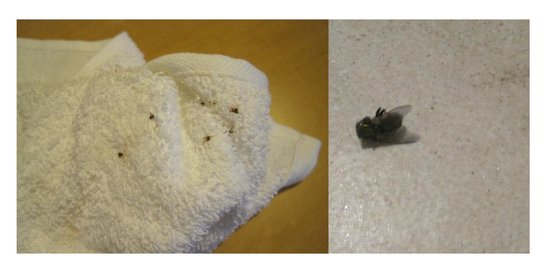 Heron Suites: Used a towel to get some of the fruit flies...