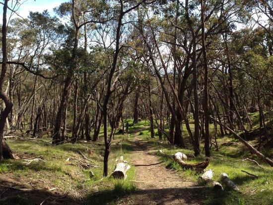 Blackhill Reserve