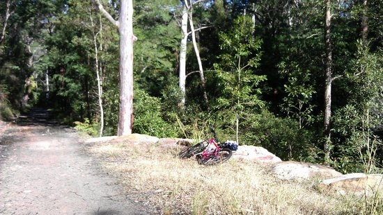 Lane Cove National Park: Good for mountain bike rookies