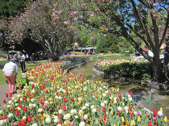 Southern Highlands: Tulips along the watercourse