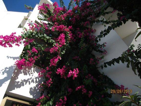 Club Calimera Kaya Side: цветы