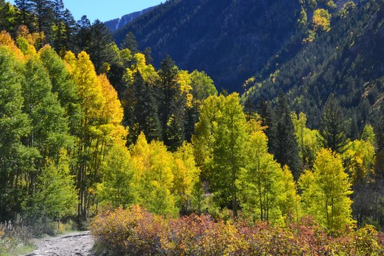 Crystal River Jeep Tours: Aspens along the trail