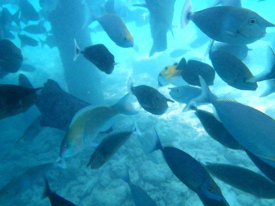 Paradise Island Resort & Spa: un vrai aquarium géant