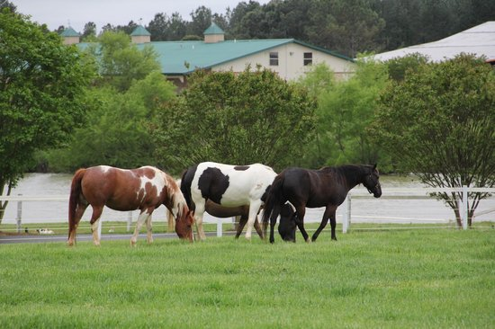 Southern Cross Ranch: Around a hundred horses to choose from~ spring is foal season~ watch one being born in the barn