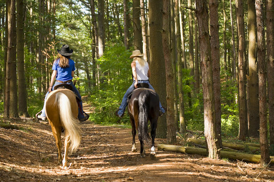 Warwick, RI: Horseback riding