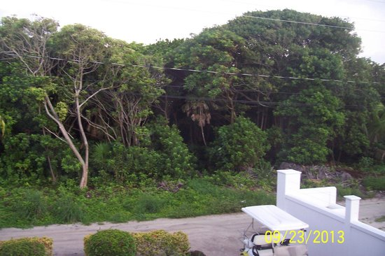 Jungle across from Casa Moradores front yard
