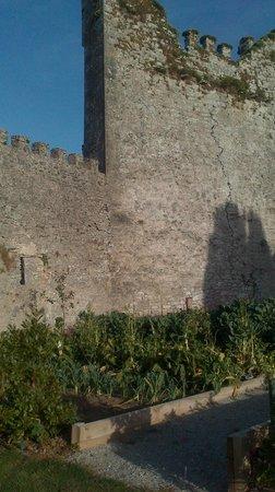 Die Ruine des Castlemartyr
