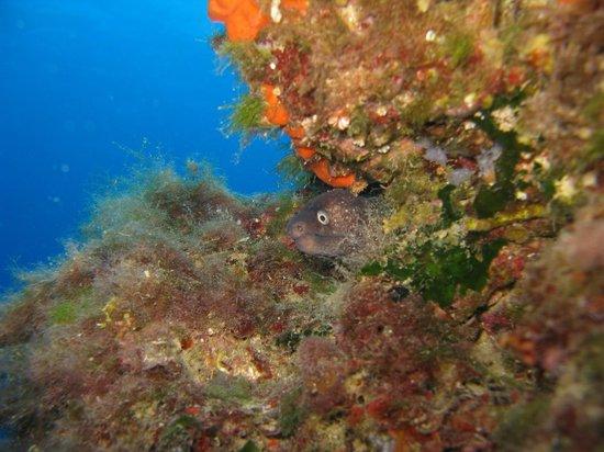 Under Hundred Diving: Murena in tana