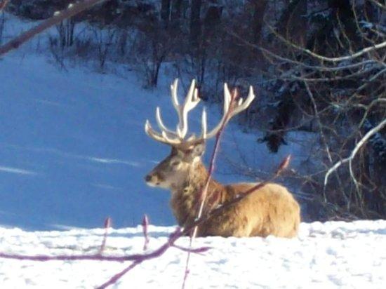 Berghotel Maibrunn: Hirsche dürfen nicht fehlen