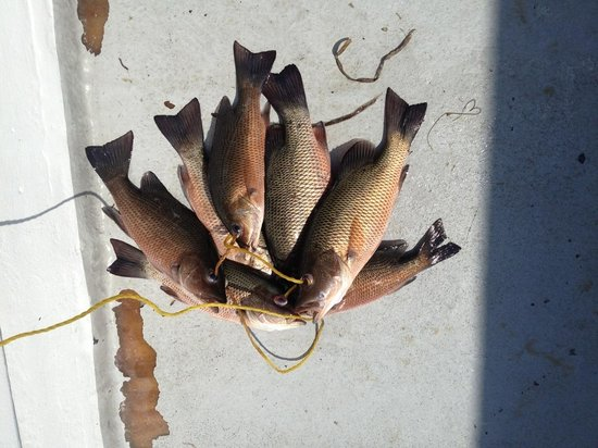 Captain Murphy's Fishing Charters : Kept what we would eat and threw back many more.