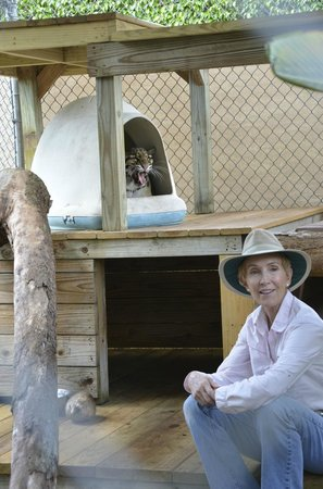 Panther Ridge Conservation Center: Judy and Ming the Clouded Leopard, Panther Ridge CC