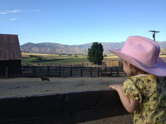 Rankin Ranch : My daughter looking out across the corral...