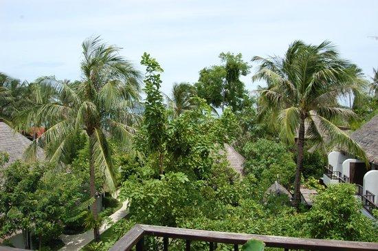 Mimosa Resort & Spa: Вид из номера