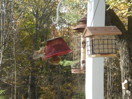 Buttonwood Inn on Mount Surprise : Another Guest at Breakfast