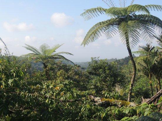 Sarinbuana Eco Lodge: Einfach Natur