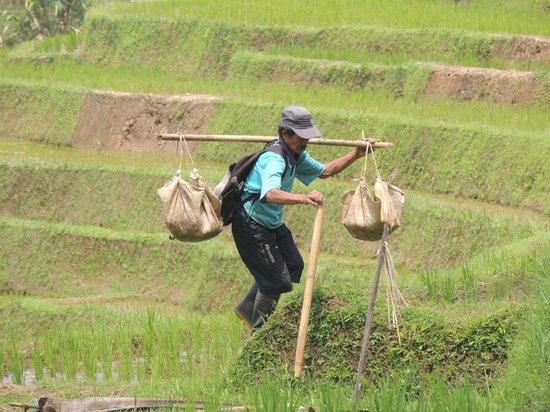 Sarinbuana Eco Lodge: Land und Leute