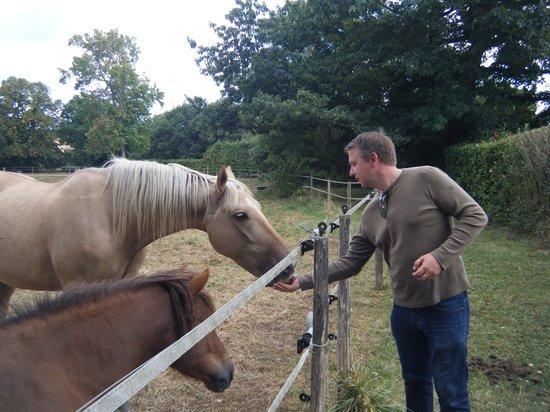 Chateau de Cop Choux: les chevaux