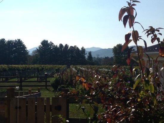 The Farmhouse at Veritas : The Vineyard