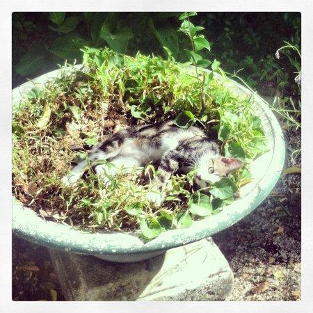 Avignon Hotel Monclar: Kitten