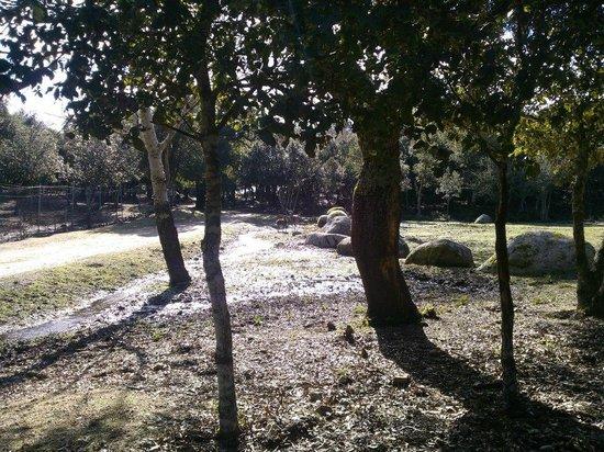 Parco Ente Foreste di Assai: posto luminoso nonostante la boscaglia