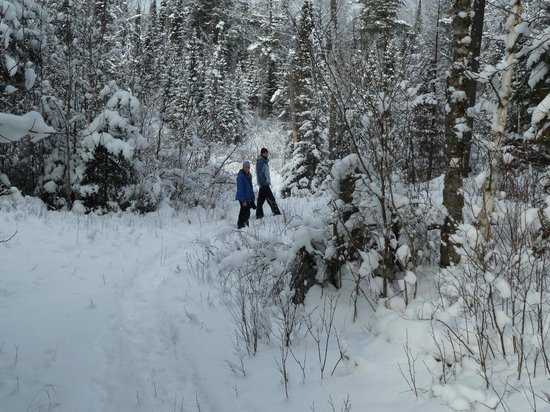 National Forest Lodge: snowshoe trail