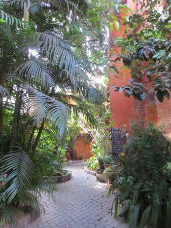 Hotel Sakamanga : Garden