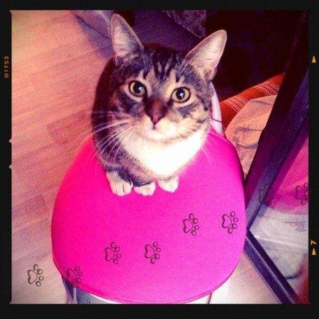 Luna Hostel: Local Cat