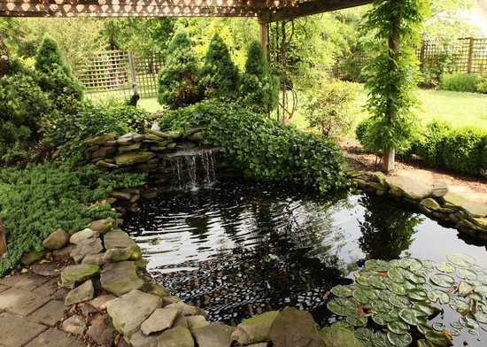 Lavender Heights Bed and Breakfast: Koi Pond
